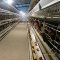 A Автоматическая птицефабрика