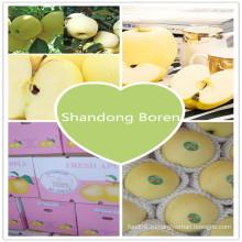 2015 Свежий китайский стандарт экспорта Золотое яблоко
