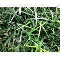 Tapete artificial da grama para a decoração do jardim, conversão plástica