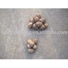 top chinese fresh big taro root