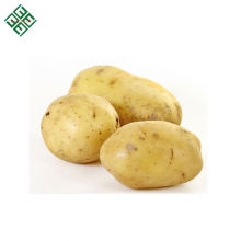 Patata orgánica fresca de Bangladesh