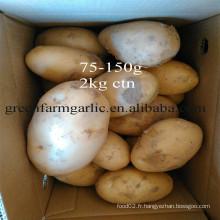 Produits de pommes de terre fraîches exportés vers dubai