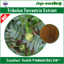 Extracto de Tribulus terrestris natural