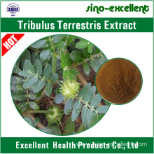 Good Quality for Standardized Herbal Extract Natural Tribulus terrestris Extract export to Benin Manufacturers