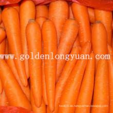 2014 Neue Frucht Frische Karotte