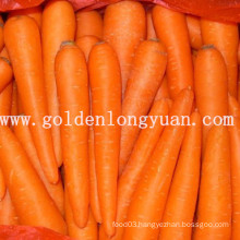 2014 New Crop Fresh Carrot