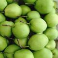 New Harvest of Fresh Shandong Pear
