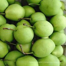 Poire verte de Shandong pour le marché de l'Inde