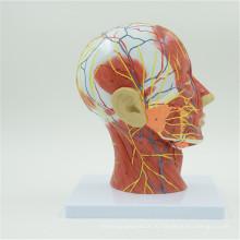 Оптовая таможня напечатала модель головы с мозгом