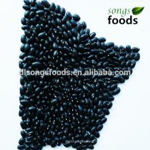 Großhandel China Importeure, schwarze Kidney-Bohne