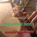 кормовая добавка Фотосинтезирующих бактерий для рыб и креветок