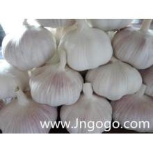 Китайский Новый Урожай Свежий Хорошего Качества Белый Чеснок