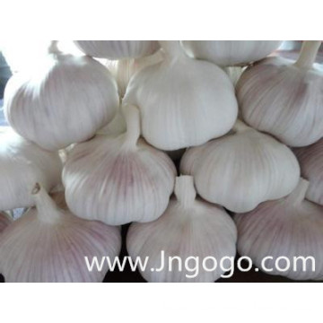 Chinese New Crop Fresh Good Quality White Garlic