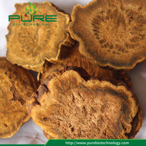 High Quality Dried Rhubarb Root/Rheum Palmatum/ Da Huang