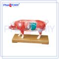 Modèle anatomique animal PNT-AM41 modèle d'acupuncture de porc