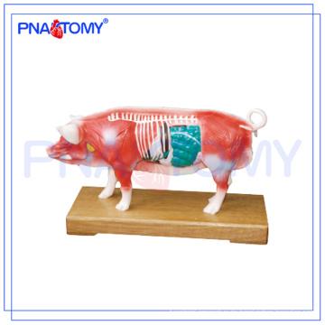 PNT-AM41 Schwein-Akupunktur-Modelltieranatomisches Modell