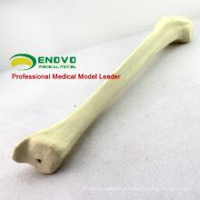 Modèle de Tibia synthétique médical de l'OS 12319 de SIMULATION de vente en gros, os de simulation de pratique d'orthopédie