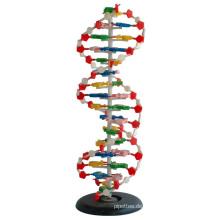 Medizinisches und unterrichtendes Modell DNA Modell 1 Teil