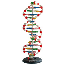 Medical and Teaching Model DNA Model 1 Part