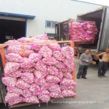 2016 Shandong Fresh Garlic with Best Quality Hot Sale