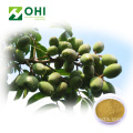 Olive Leaf Extract Oleuropein Powder