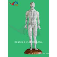 HR-505 Human Acupuncture Point Model 46CM, acupuntura e modelo