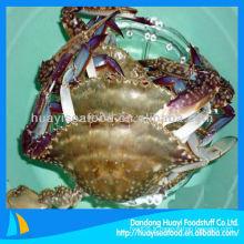 Crabes de boue vivants Crabes congelés