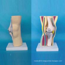 Human Knee Joint Skeleton Medical Anatomic Function Model (R040106)