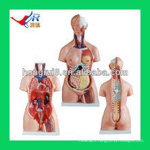 Dual sex torso 85CM (23parts) human mannequin torso