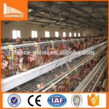 African market chicken egg layer cages / used chicken egg layer cages for sale