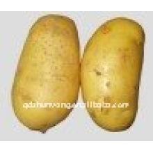 Patata amarilla