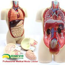TUNK ANATOMY 12014 Torso 16 piezas 45 cm Tamaño medio Dual-Sex anatómico Cuerpo órganos humano Torso humano