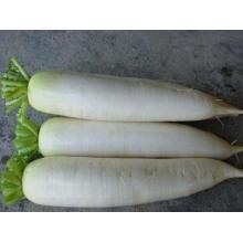 Export High Quality Bulk Chinese Fresh White Radish