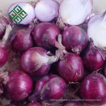 L'origine chinoise de l'oignon frais en peluche