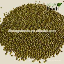 Haricots verts frais avec des prix compétitifs