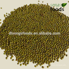 Fresh Green Beans with competitive price