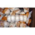 Export Good Quality Pure White Garlic