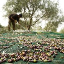 Qualidade manufatura oliveiras coletar compensação