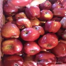 красный свежий гала, и huaniu яблоко Оптовая цена