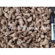 Prix ​​de gros Premium Spawn Shiitake Leg Dry Secured Food