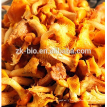 High quality Organic Chanterelle Mushroom Powder