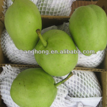 Frische Frühe reifen su Birnenlieferant in China