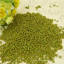 Bem selecionado pequeno feijão verde mung