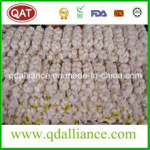 Ninguno GMO Ajo Blanco Normal con Certificado ISO9001