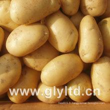 Qualité exportée de pommes de terre fraîches