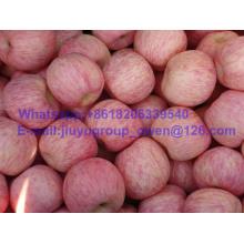 Food Grade China Top Quality New Crop FUJI Apple