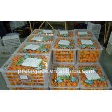 2014 neue Ernte Frische Baby Mandarine / Orange