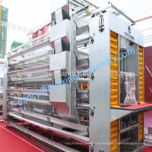 H tipo batería galvanizada en caliente jaula de pollo con sistema de alimentación