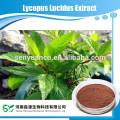 Экстракт Lycopus Lucidus