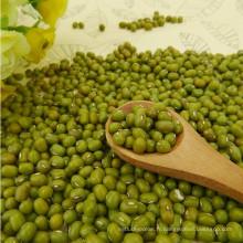 2012 nouvelle récolte petit haricot mungo vert, origine Hebei